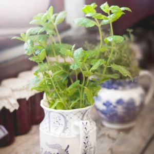 Santé La vie - Krystine St-Laurent - plantes rituels rafraichir pitta