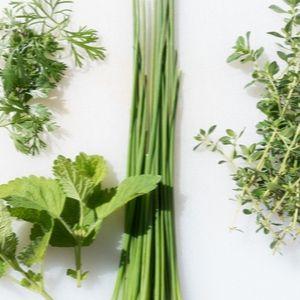 Santé La vie - Krystine St-Laurent - plantes stimuler vitalité