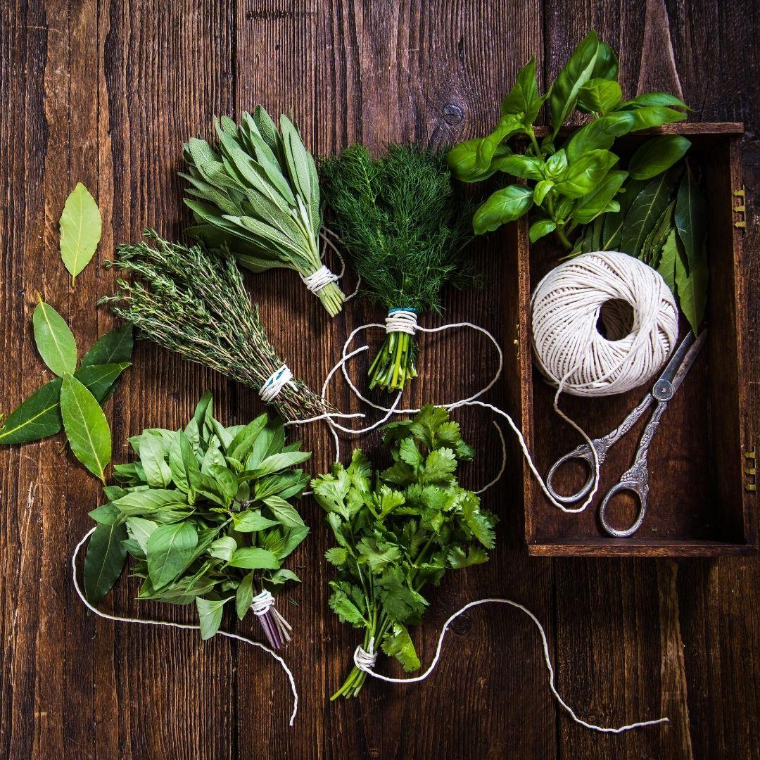 Récolter et conserver les fines herbes et plantes médicinales - Krystine St-Laurent